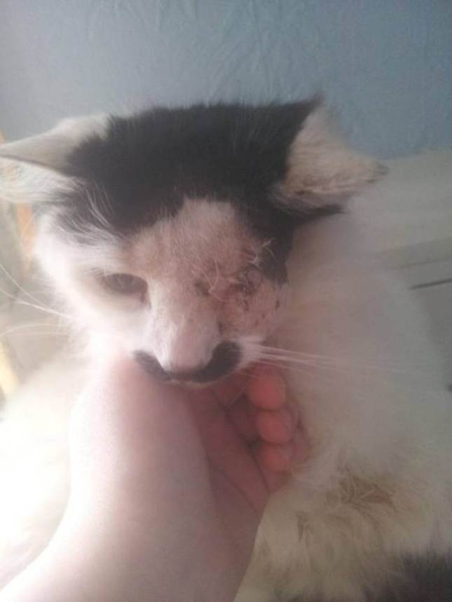 Cat Assaulted and Discarded In a Container for 'Looking Like Hitler'