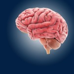 Exercise Makes Kids' Brains MoreEfficient