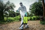 Ebola Outbreak Likely Started With OnePerson