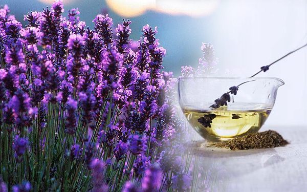 Suffering with Menstrual Cramps? Try Lavender Oil