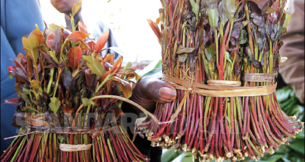 Miraa is Extremely bad for Mental Health, study proves