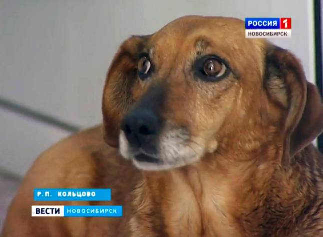 The loyal dog that has waited in vain every day for more than a year outside Russian hospital for the beloved owner who will never return