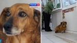 Loyal dog is still waiting at hospital where owner died two yearsago