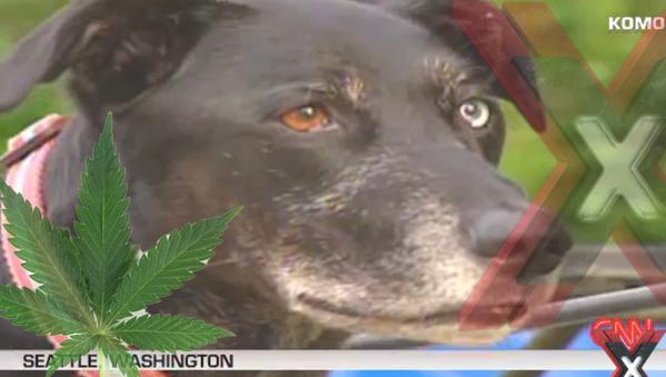 Dog Gets Higher on Weed Than Wiz Khalifa??!! [VIDEO]